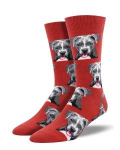 Socksmith Men's Pit Bull Red